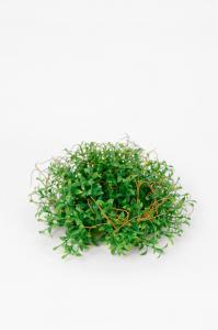 Mr Plant Tradescantia - Grön - 7 cm