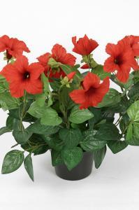 Petunia - Röd - 30 cm - www.frokenfraken.se