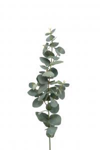 Eucalyptus - Grön - 75 cm - www.frokenfraken.se
