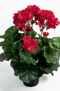 V.44 - Pelargon - Röd - 35 cm - www.frokenfraken.se