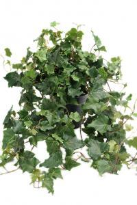 Mr Plant Murgröna - Konstväxt - 75 cm