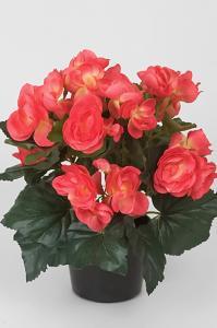 Begonia - Rosa - 28 cm - www.frokenfraken.se