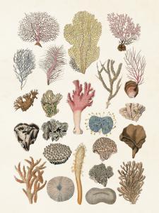 Poster - Vintage - Koraller - 18 x 24 cm - www.frokenfraken.se