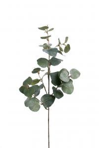 Mr Plant Eucalyptus med is - Grön - 70 cm