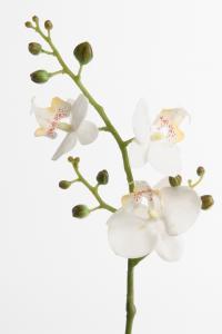 Phalaenopsis - Vit - 50 cm - www.frokenfraken.se