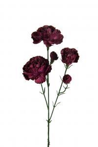 Mr Plant Elegance nejlika - Röd - 65 cm
