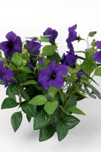 Mr Plant Petunia - Blå - 30 cm - www.frokenfraken.se