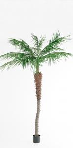 Mr Plant Phoenix Palm - - 210 cm