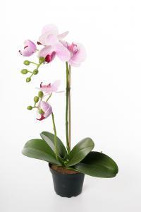 Mr Plant Phalaenopsis - Lila - 45 cm - www.frokenfraken.se