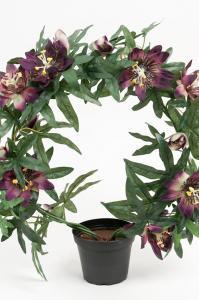 Passiflora - Lila - 40 cm - www.frokenfraken.se