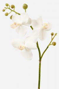 Phalaenopsis - Vit - 55 cm - www.frokenfraken.se