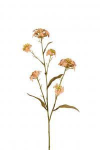 Blomster Iberis - Brun - 60 cm - www.frokenfraken.se