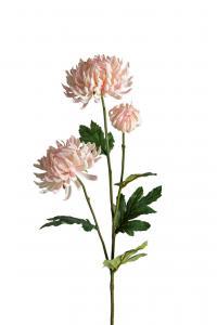 Chrysanthemum - Rosa - 60 cm - www.frokenfraken.se