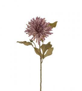 Chrysanthemum - Lila - 60 cm - www.frokenfraken.se