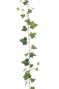 Girlang av murgröna - 180 cm - www.frokenfraken.se