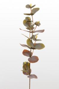 Mr Plant Eucalyptus - 40 cm