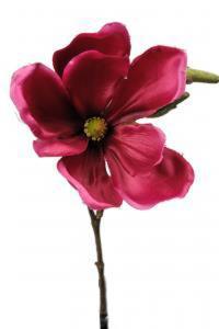 Magnolia - Rosa - 30 cm - www.frokenfraken.se