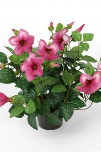Petunia - Rosa - 30 cm - www.frokenfraken.se