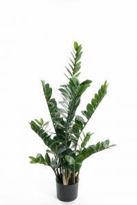 Zamifolia - - 110 cm - www.frokenfraken.se