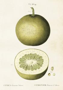 Poster - Vintage - Citron - 35x50 cm - www.frokenfraken.se