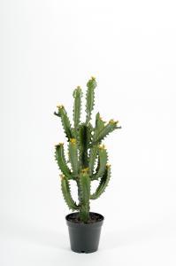 Mr Plant Kaktus - Grön - 70 cm - www.frokenfraken.se
