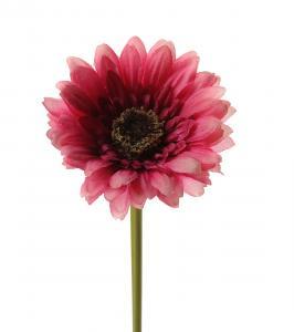 Mr Plant Gerbera - Rosa - 25 cm