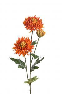 Mr Plant Chrysanthemum - Orange - 60 cm
