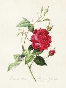 Poster - Vintage - Ros Röd - 18 x 24 cm - www.frokenfraken.se