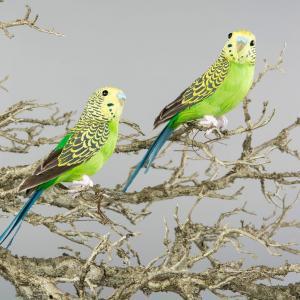 Alot Fåglar - 2 st - Gröna Undulater Sittande - 20 cm