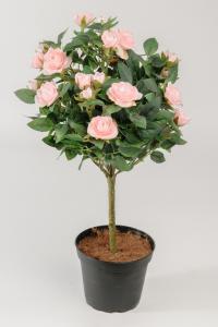 Mr Plant Ros - 8 st - Rosa - 45 cm