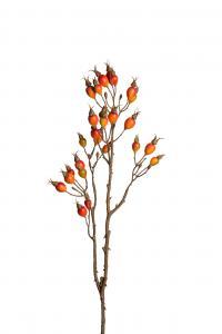 Nypon - 12 st - Orange - 80 cm - www.frokenfraken.se