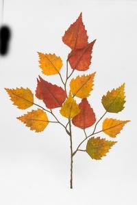 Höstkvist - Orange - 33 cm - www.frokenfraken.se