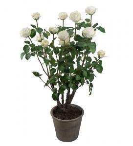 Ros - Vit rosenbuske i kruka - Konstväxt - 125 cm - www.frokenfraken.se