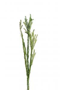 Mr Plant Kvist - Grön - 55 cm