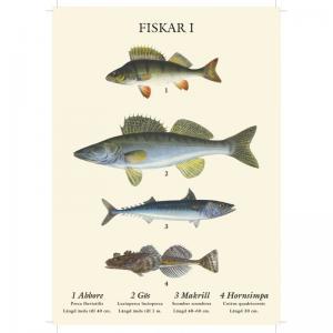 Vykort - Fiskar - 21 x 15 cm - www.frokenfraken.se