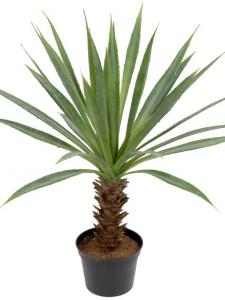 Mr Plant Agave - Konstväxt - 40 cm