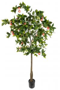 Äppleträd - Grön - 200 cm - www.frokenfraken.se