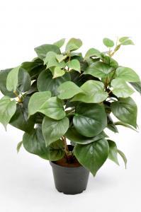 Mr Plant Philodendron - Grön - 35 cm - www.frokenfraken.se