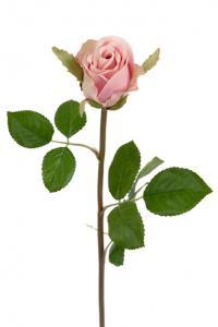 Mr Plant Ros - Ljusrosa sidenros - 50 cm