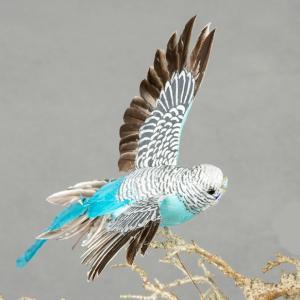 Fågel - Turkos Undulat Flygande - 20 cm - www.frokenfraken.se