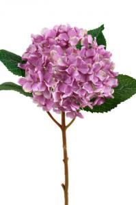 Mr Plant Hortensia - Lila sidenblomma - Ø12 cm