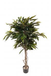 Longifolia - - 150 cm - www.frokenfraken.se