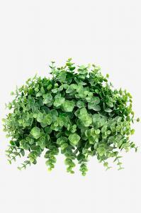 Mr Plant Eucalyptus - Grön - 13 cm