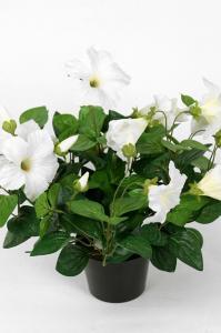 Petunia - Vit - 30 cm - www.frokenfraken.se