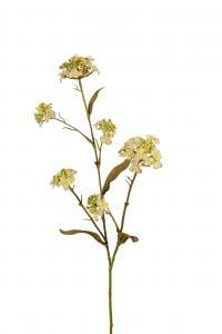 Blomster Iberis - Grön - 60 cm - www.frokenfraken.se