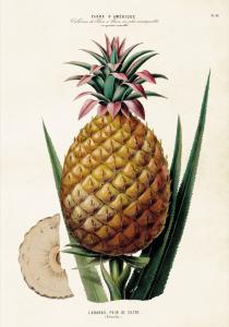 Poster - Vintage - Ananas - 35x50 cm - www.frokenfraken.se