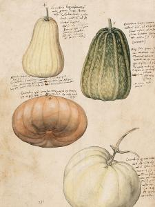 Poster - Anno 1550 - 18 x 24 cm - www.frokenfraken.se