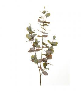 Mr Plant Eucalyptus - 70 cm