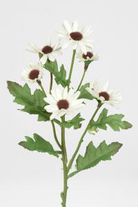 Chrysanthemum - Vit - 40 cm - www.frokenfraken.se
