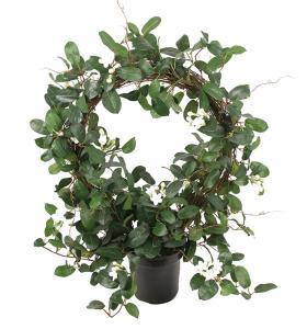 Mr Plant Stephanotis - Konstväxt - 75 cm